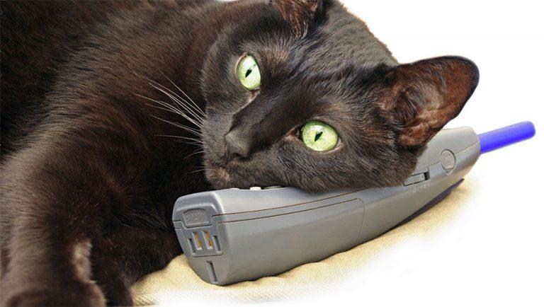 O pisica neagra stand cu capul pe un telefon.
