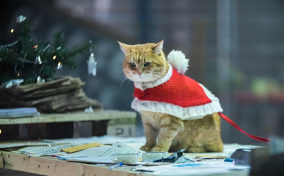 Pisica intr-un costum tematic de Craciun.