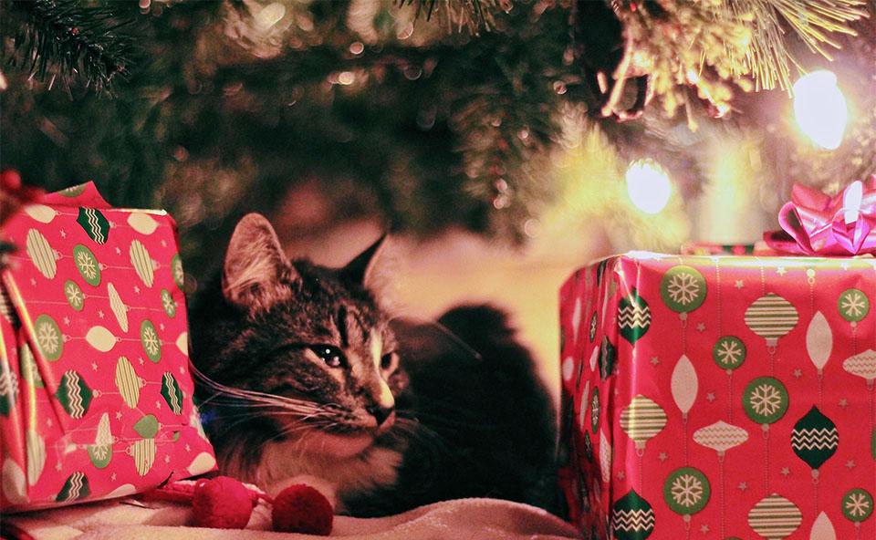 Pisica stand sub brad printre cadouri.