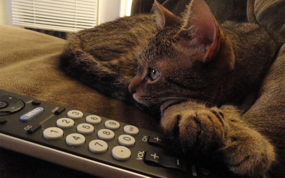 Pisica stand culcata pe o canapea langa o telecomanda.