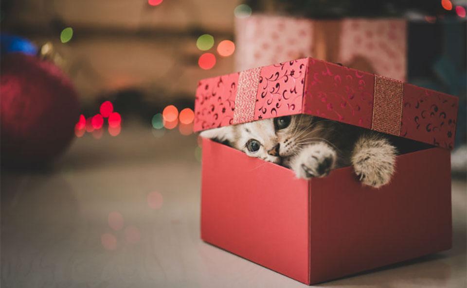 Pui de pisica intr-o cutie de cadou.