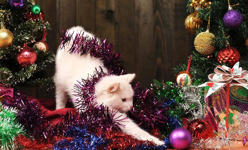 Pisica jucandu-se cu decoratiunile pentru brad.