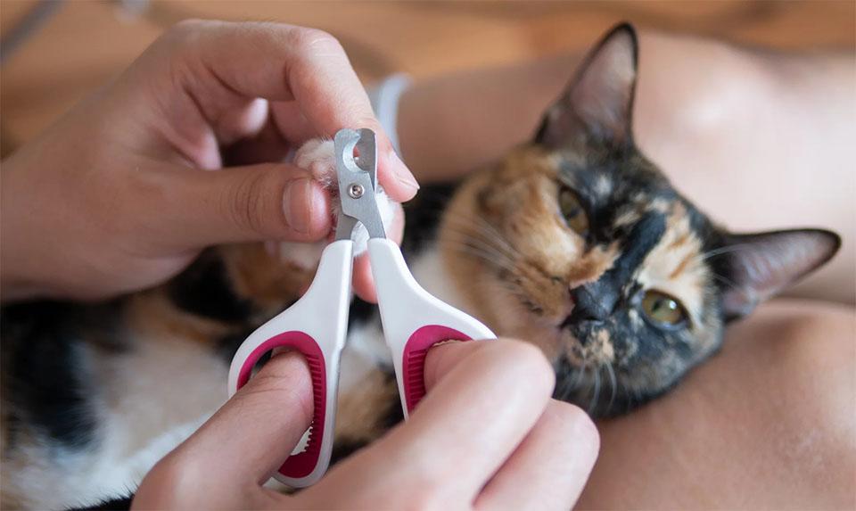 Persoana taind ghearele pisicii sale.