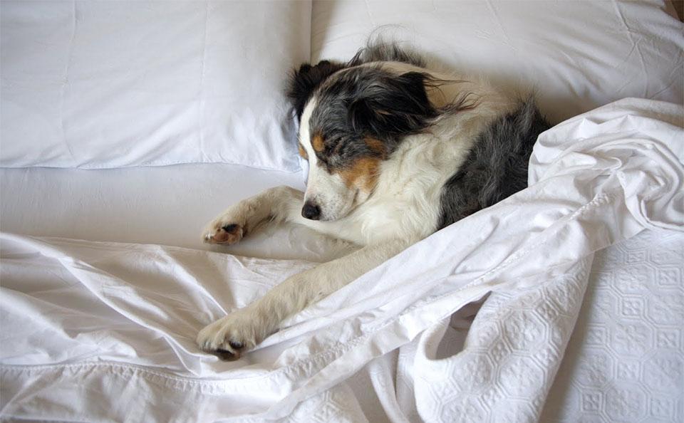 Caine dormind intr-un pat.