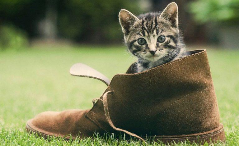 Pui de pisica intr-o gheata.