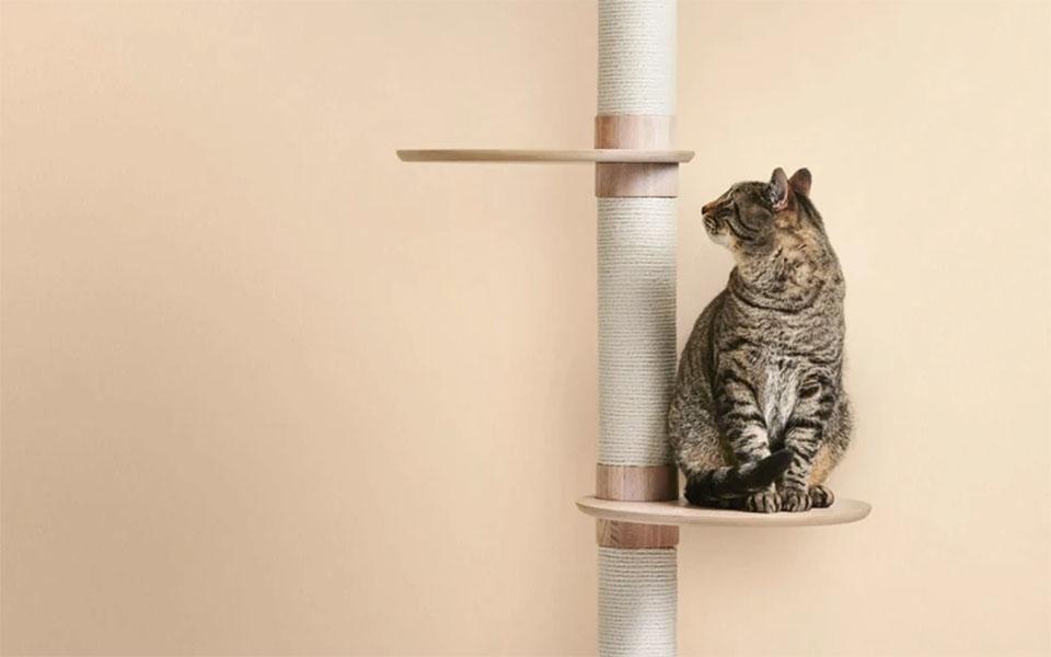 Pisica stand pe un ansamblu de joaca.
