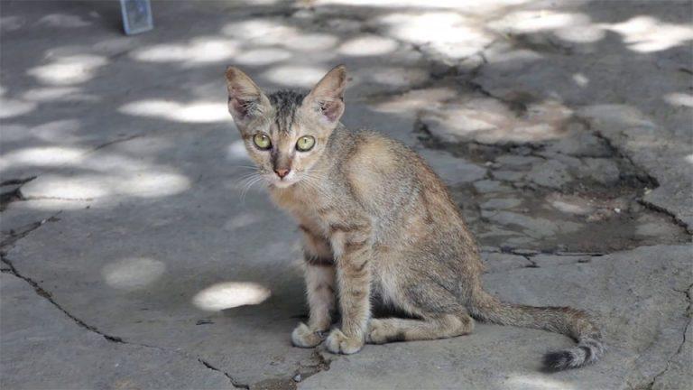 Pisica slaba stand pe ciment.