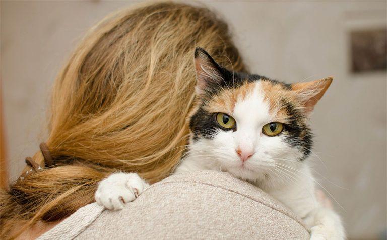 Pisica tinuta in brate de o fata.