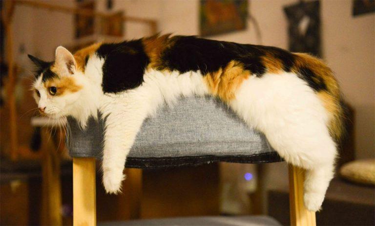 Pisica stand culcata pe un taburet.