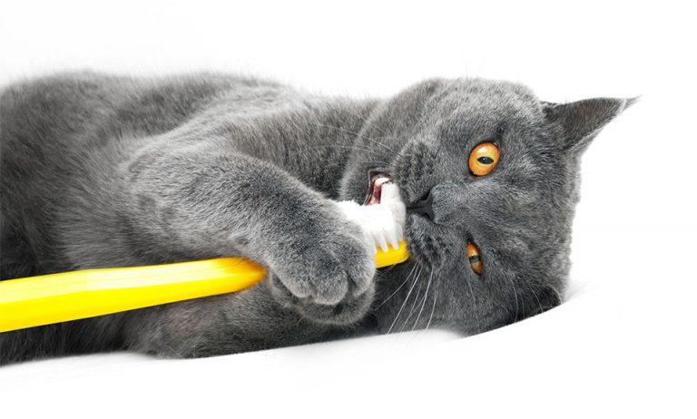 Pisica jucandu-se cu o periuta de dinti galbena.
