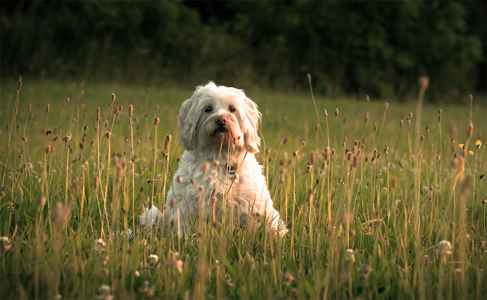 Caine stand in iarba pe un camp.
