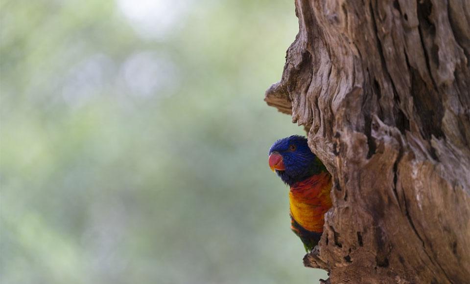 Papagal stand pe trunchiul unui copac.
