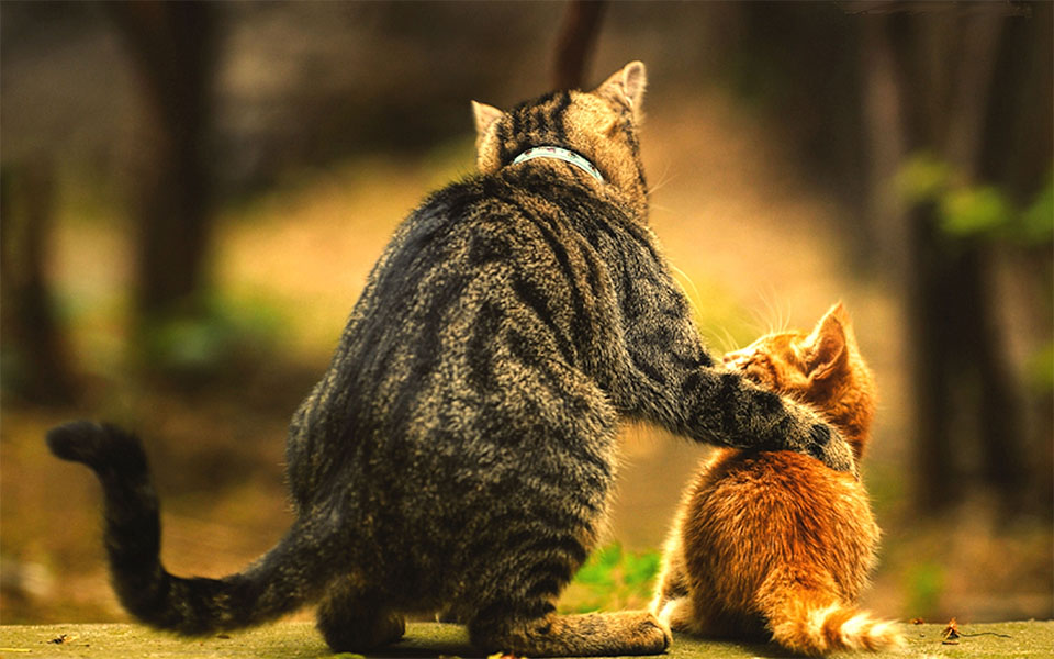 Pisica stand ca o labuta pe un pui de pisica.