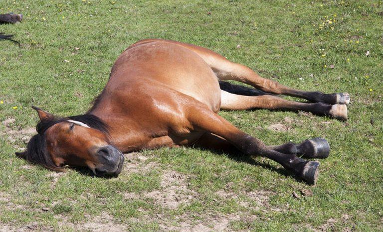 Cal dormind in iarba.