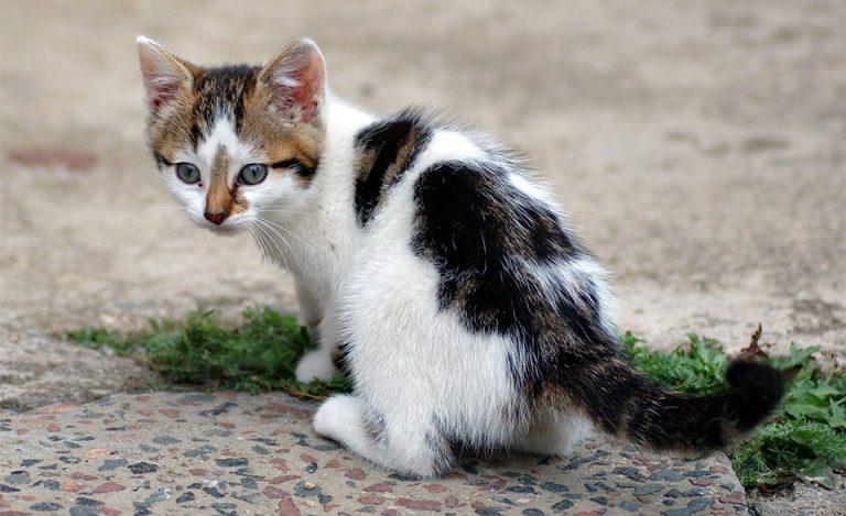 Pui de pisica multicolora stand pe o alee din piatra.