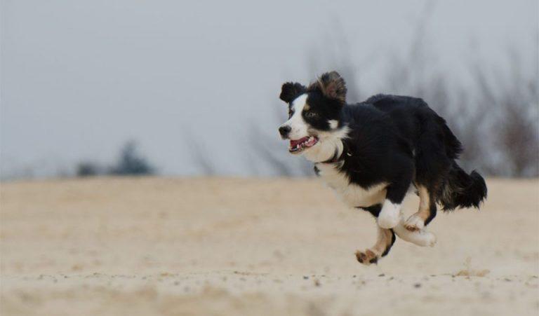 Caine alergand pe o plaja.