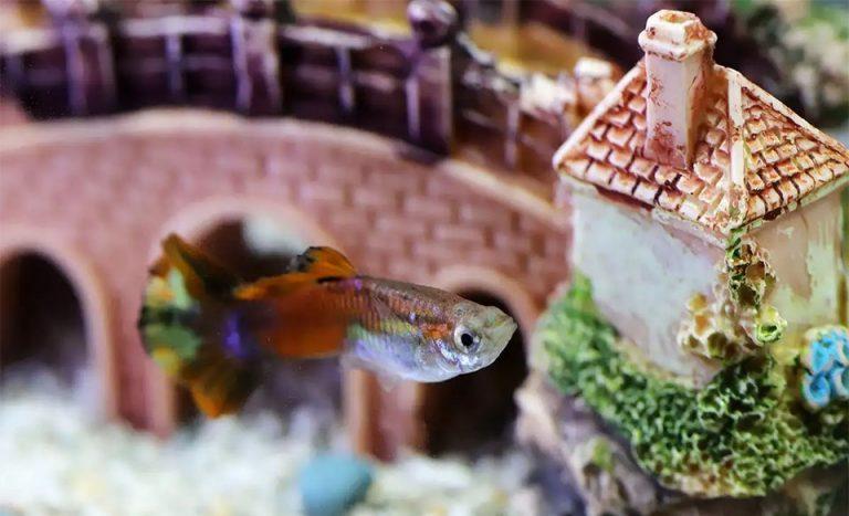 Peste intr-un acvariu vazut de aproape.