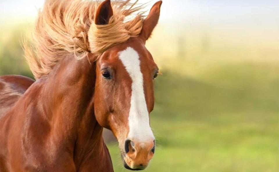 Cal vazut de aproape.