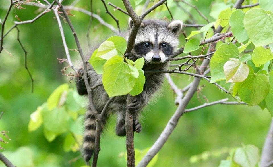 Pui de raton intr-un copac.