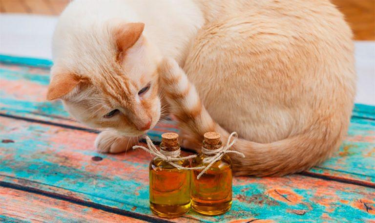 Pisica mirosind doua sticlute.